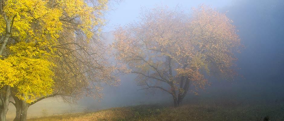 Slyder-Herbst-Nebel-IMG_0254